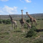 Ufumene Game Lodge Photo