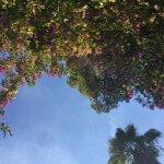 Ipanema Park Foto