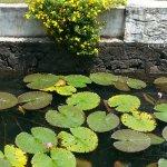 Paradise Resorts Foto