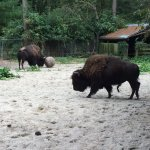 Foto de Salisbury Zoo