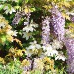 Foto de Sissinghurst Castle Garden