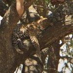 Photo of Right Choice Tours & Safaris