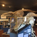 The Whale Museum Foto