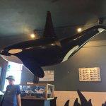 Orca model