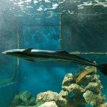 Foto de Ilha dos Aquarios