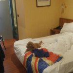 Photo de Hotel Roxy