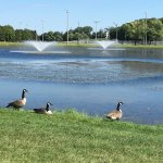 Cobb's Hill Park - geese at the reservoir