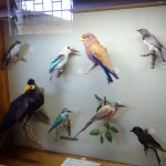 Copperbelt Museum Foto