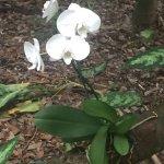 Foto de Fairchild Tropical Botanic Garden