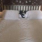 Cat in Hemingway's Bed