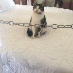 Cat in Hemingway's Bed 2