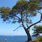 Photo de Îles de Lérins