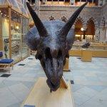Foto di Pitt Rivers Museum