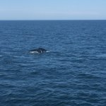 Photo de New England Aquarium Whale Watch