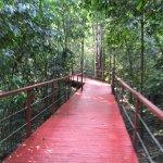Foto de La Cantera Jungle Lodge