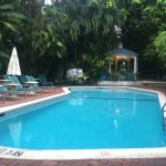 Pool in the jungle - view from the bar