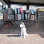 Old luggage and my dog