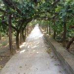 """Agriturismo """"Il Giardino di Vigliano"""" Foto"""