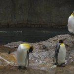Zoo Wuppertal Foto