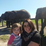 Great time with the ele's at Knysna Elephant Park