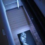 HUMAN ANIMALS Ausstellung im KulTurm – von Tierrechtskünstler ROLAND STRALLER
