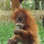 Monkey World Foto