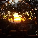 Sunset through the vines.