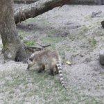 Foto de Parc Zoologique