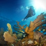 A short 20 minute boat ride and you'll be diving amazing reefs like these