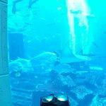Atlantis, The Palm Foto