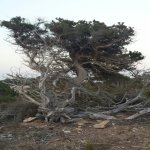 Punta Rasa Foto