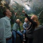 Reiman Aquarium Caribbean Tunnel