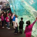 Reiman Aquarium