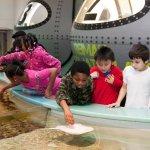 Reiman Aquarium Touch Tanks