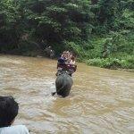 Photo de Thai Elephant Conservation Center