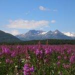 Zdjęcie Alaska Bear Adventures