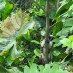 Foto di Gamboa Rainforest Resort