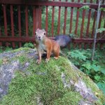 Schöne Wanderlandschaft mit zutraulichen Tieren