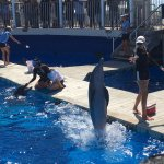 I think the dolphins were the main attraction and fun show.