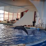 Foto di National Aquarium, Baltimore