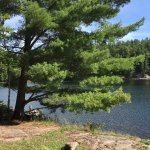 Raven lake is a dream come true in Algonquin highlands. It is a canoe haven with some great camp