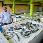 Inside the fish market. Majority of these enclosures were empty