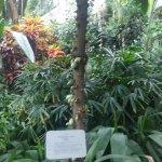 Foto de Parque Planten un Blomen