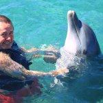 Dolphin heaven