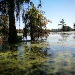 Photo de Cajun Country Swamp Tours