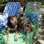 Dogs enjoying some shade.