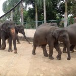 Algunos elefantes pequeños