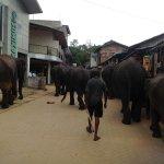 Cuidador con sus elefantes