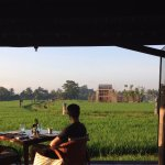 Beautiful Vista Of Rice Fields At Breakfast