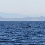 Eagle Wing Whale Watching Tours Foto